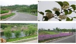大连-开发区-植物园(大连园林绿化项目)