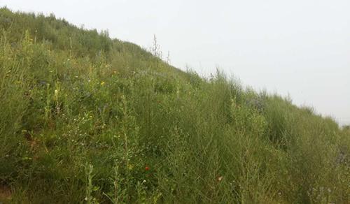 阜新废弃矿山复绿合作实验工程(地产绿化工程)