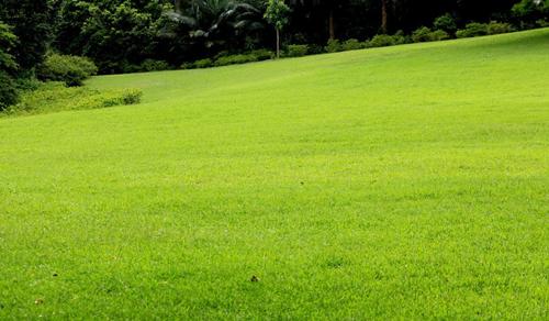 地被类--草坪
