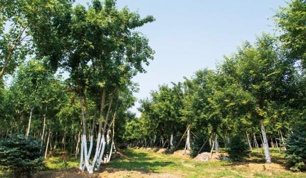 苗圃培育基地