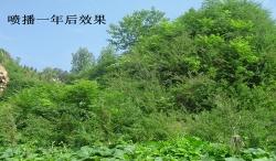 普兰店市星台镇塔南村矿坑生态治理工程(大连园林绿化)
